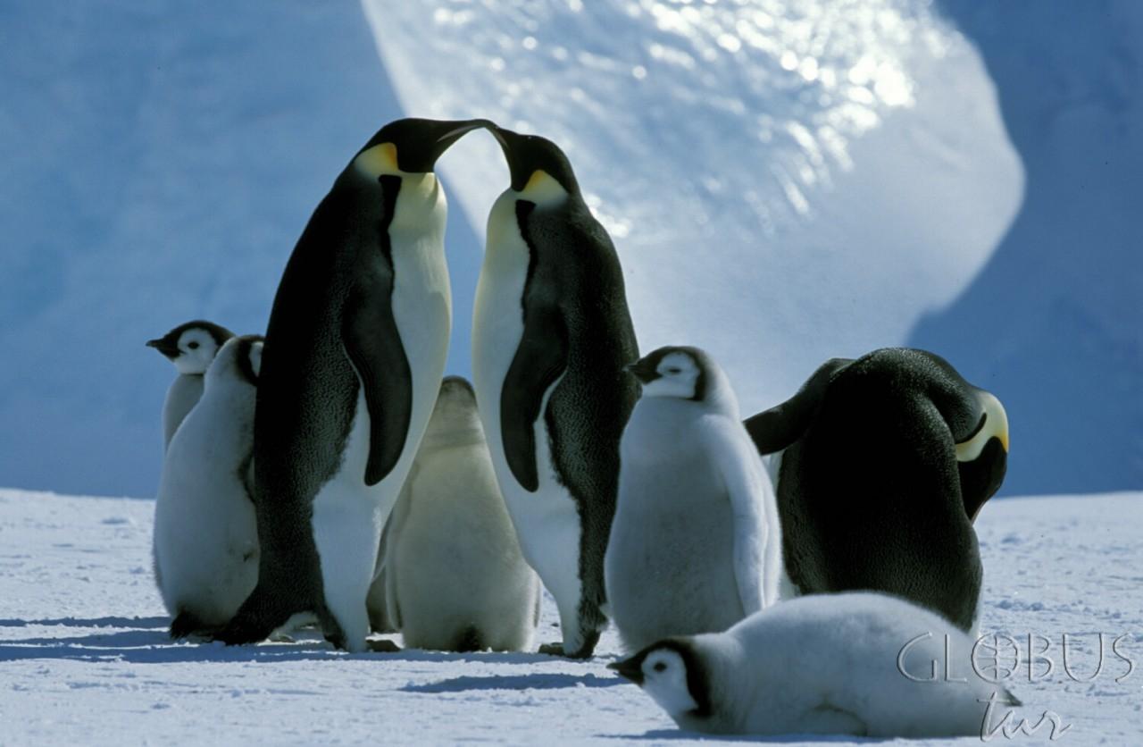 Антарктика пингвины